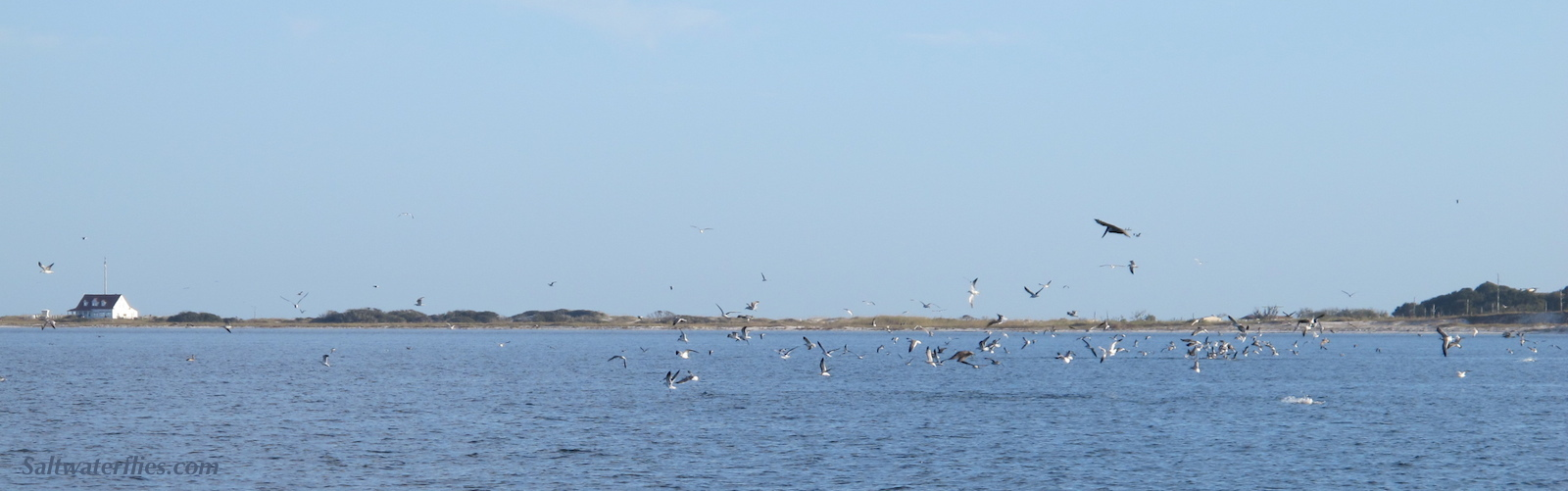 Blitz! - Photo: Chris Windram