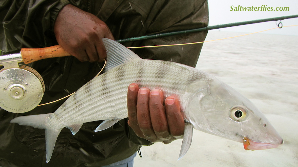 Hott Butt Bonefish!